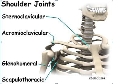 http://www.eorthopod.com/images/ContentImages/shoulder/shoulder_dislocation/shoulder_dislocation_anatomy03.jpg
